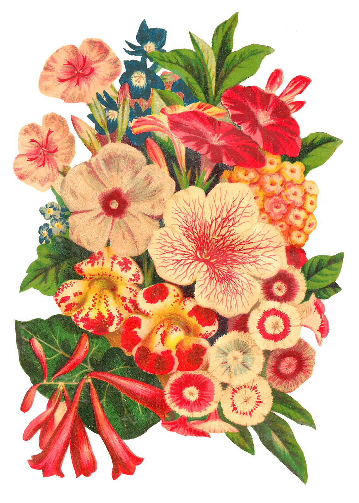 Antique images stock seed. Flower clipart pretty flower