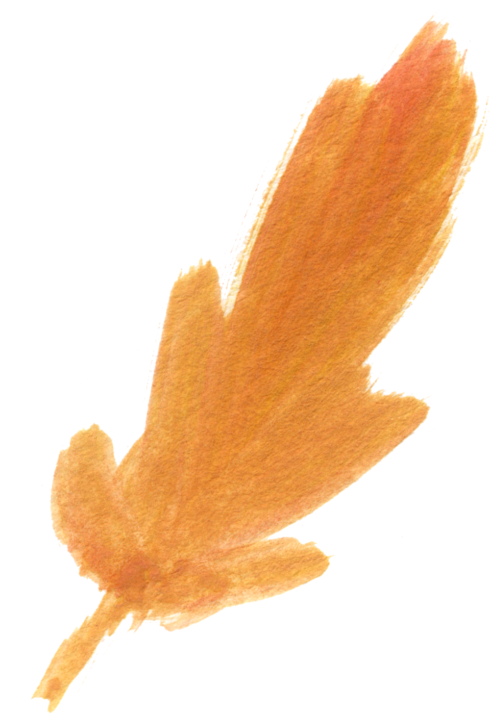 Clipart free feather. Fall watercolor floral clip