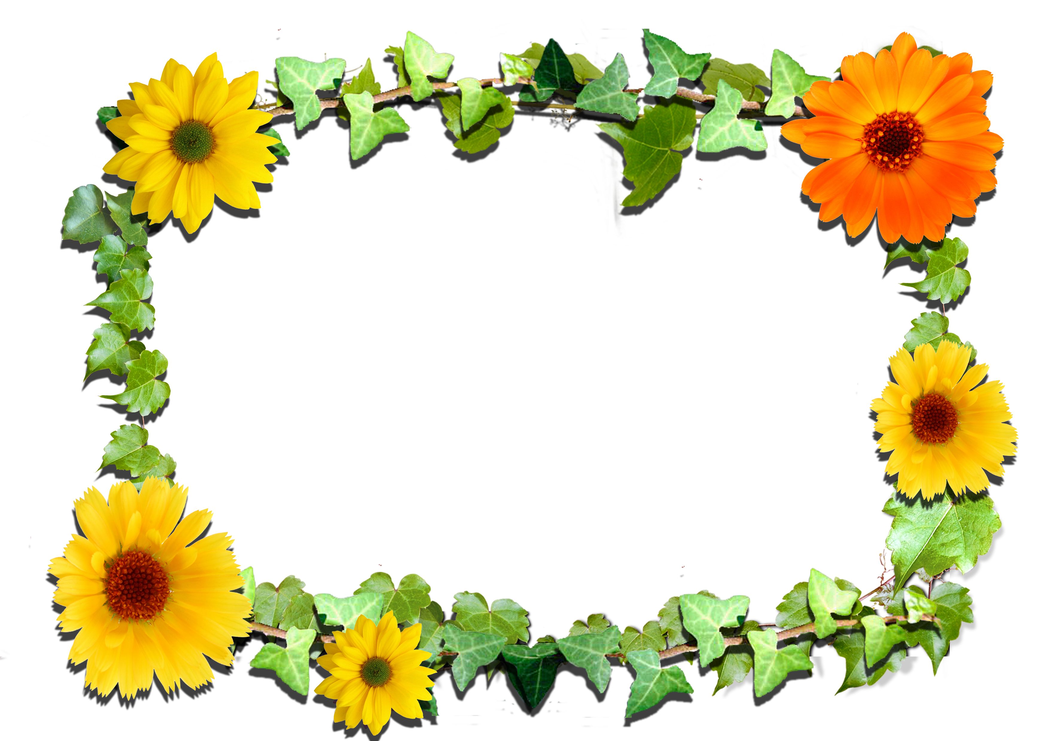 Flowers frame gallery yopriceville. Frames clipart flower