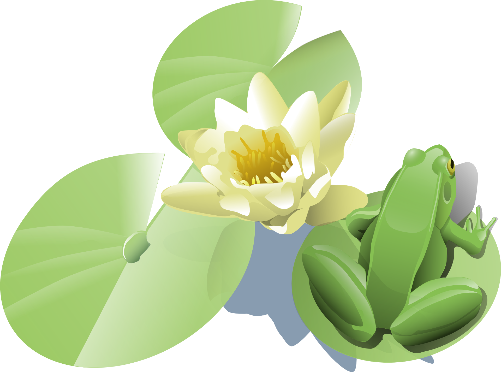 And lily pad png. Flowers clipart frog