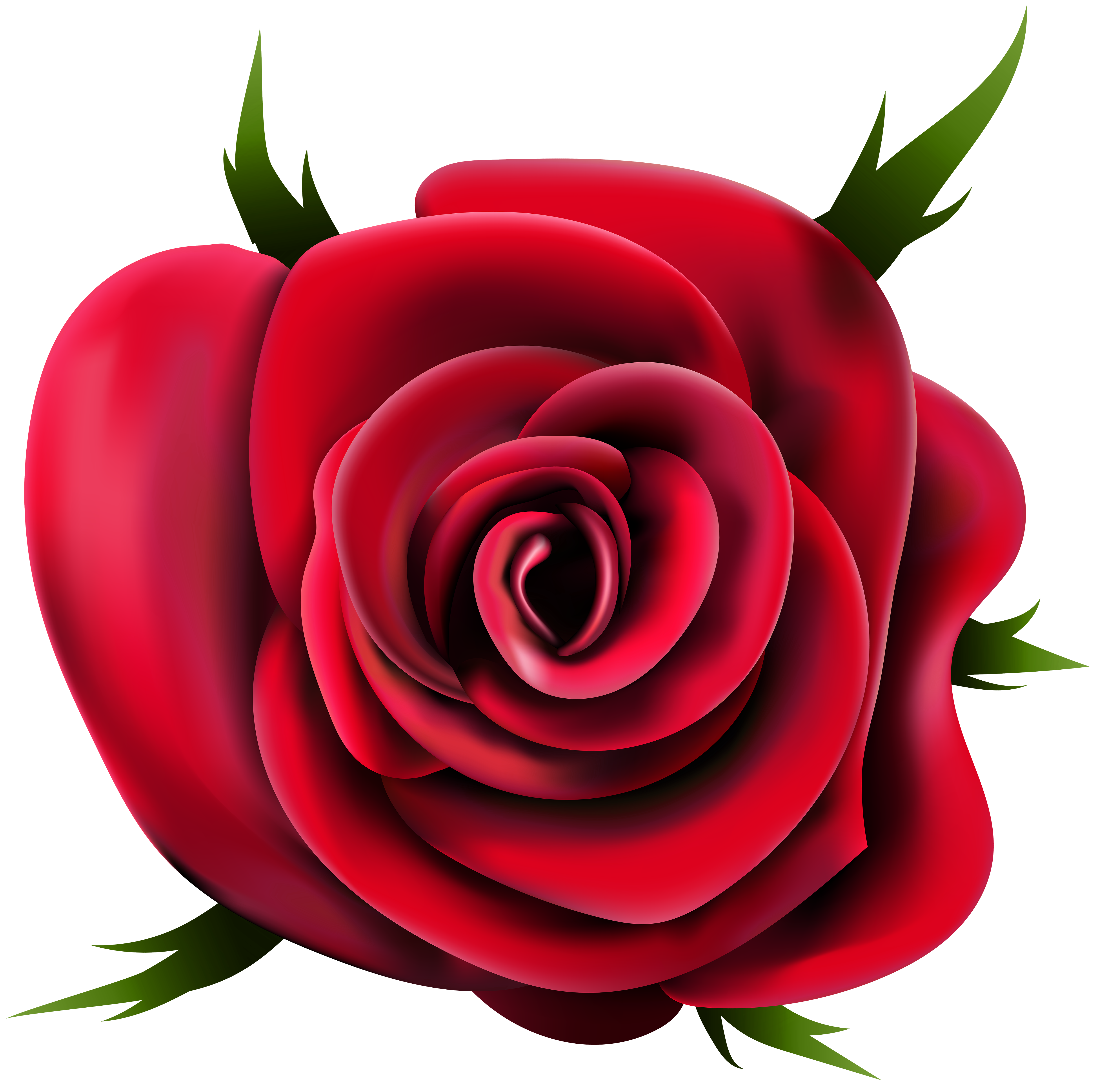 Transparent rose png clip. Poppy clipart three