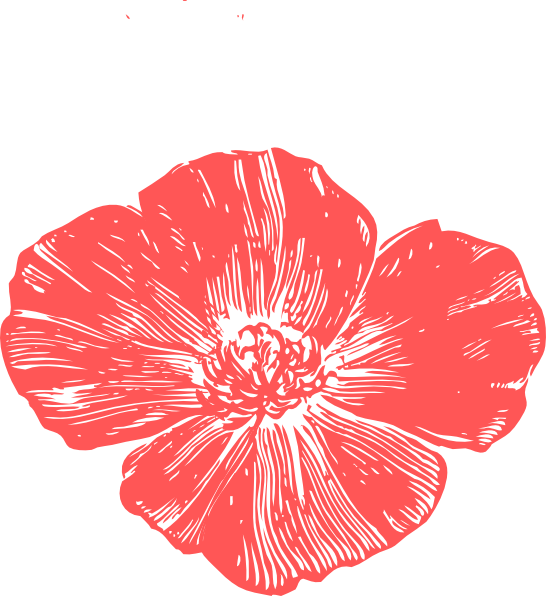 Poppy clipart remebrance. Peach flower