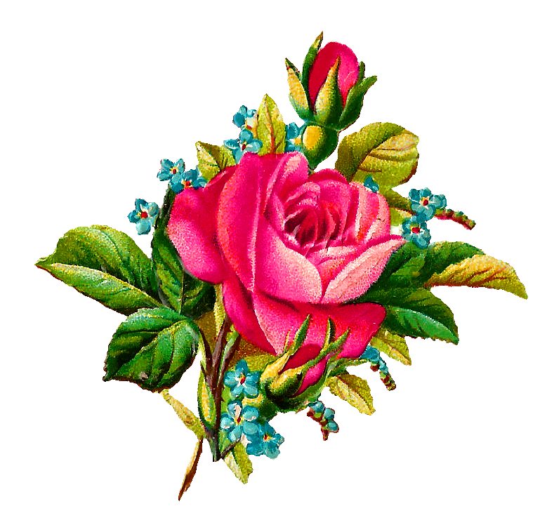 collection of flower. Flowers clipart illustration