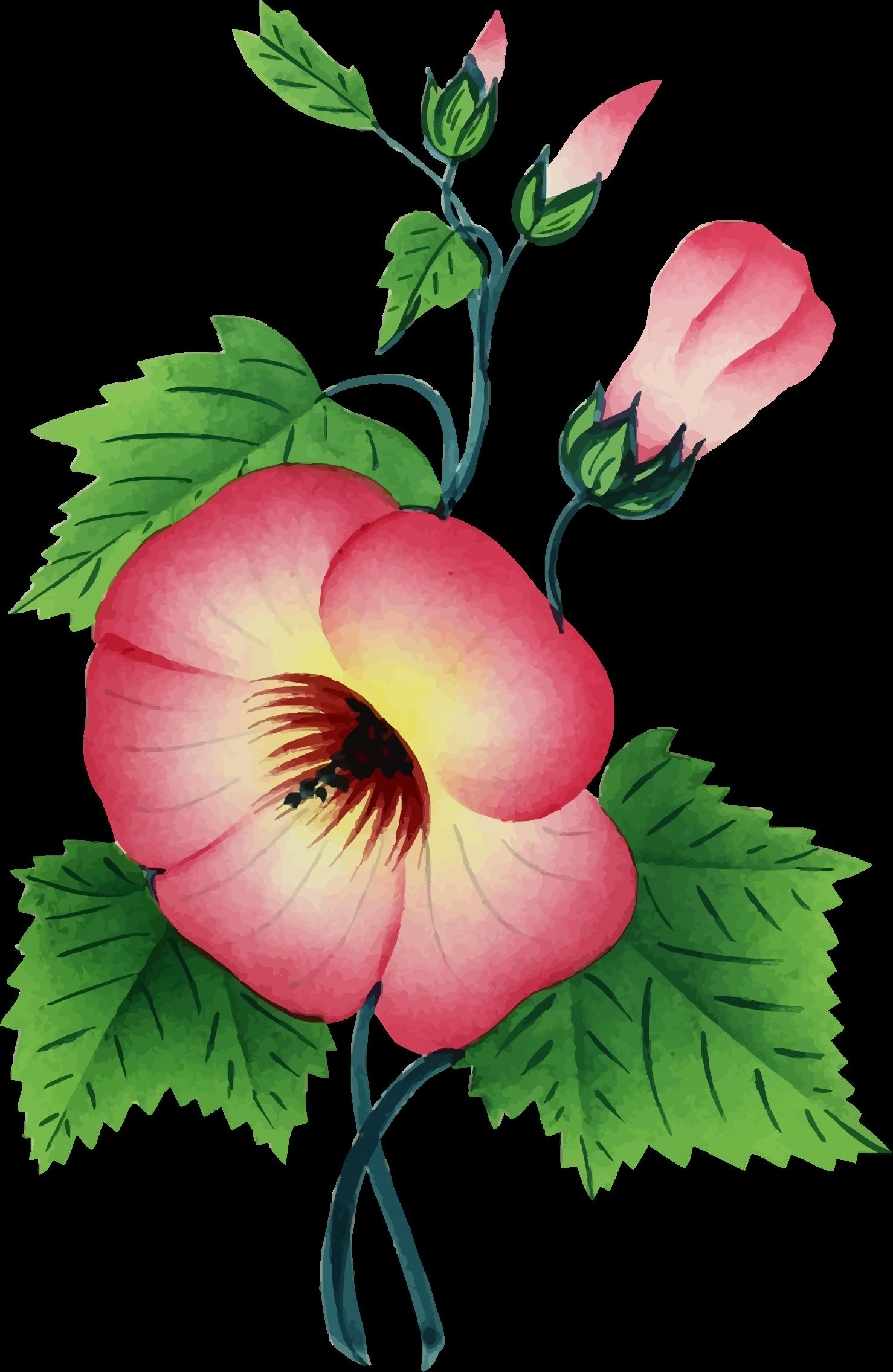 Flower illustration png. Clipart big image