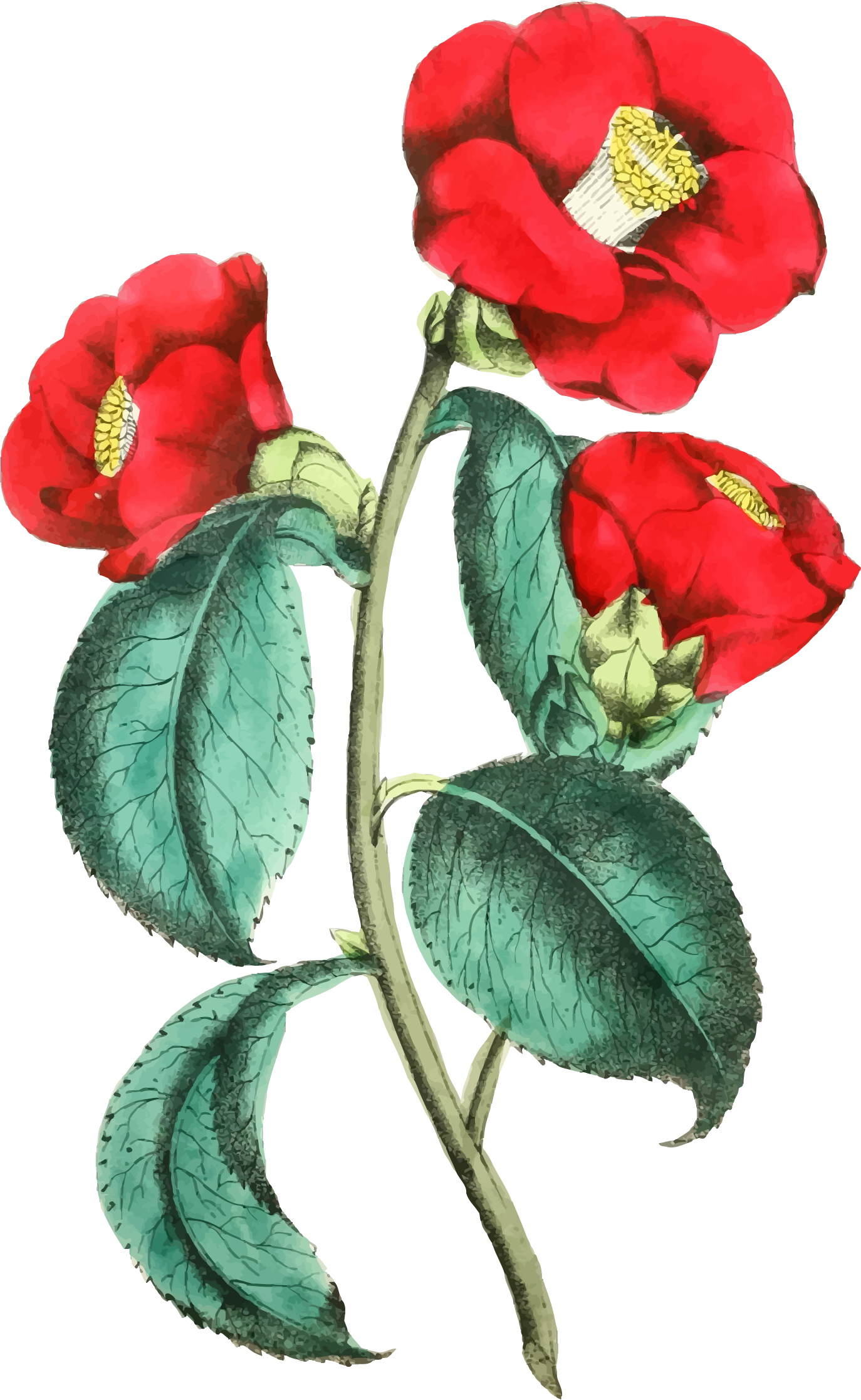 Flower big image png. Flowers clipart illustration