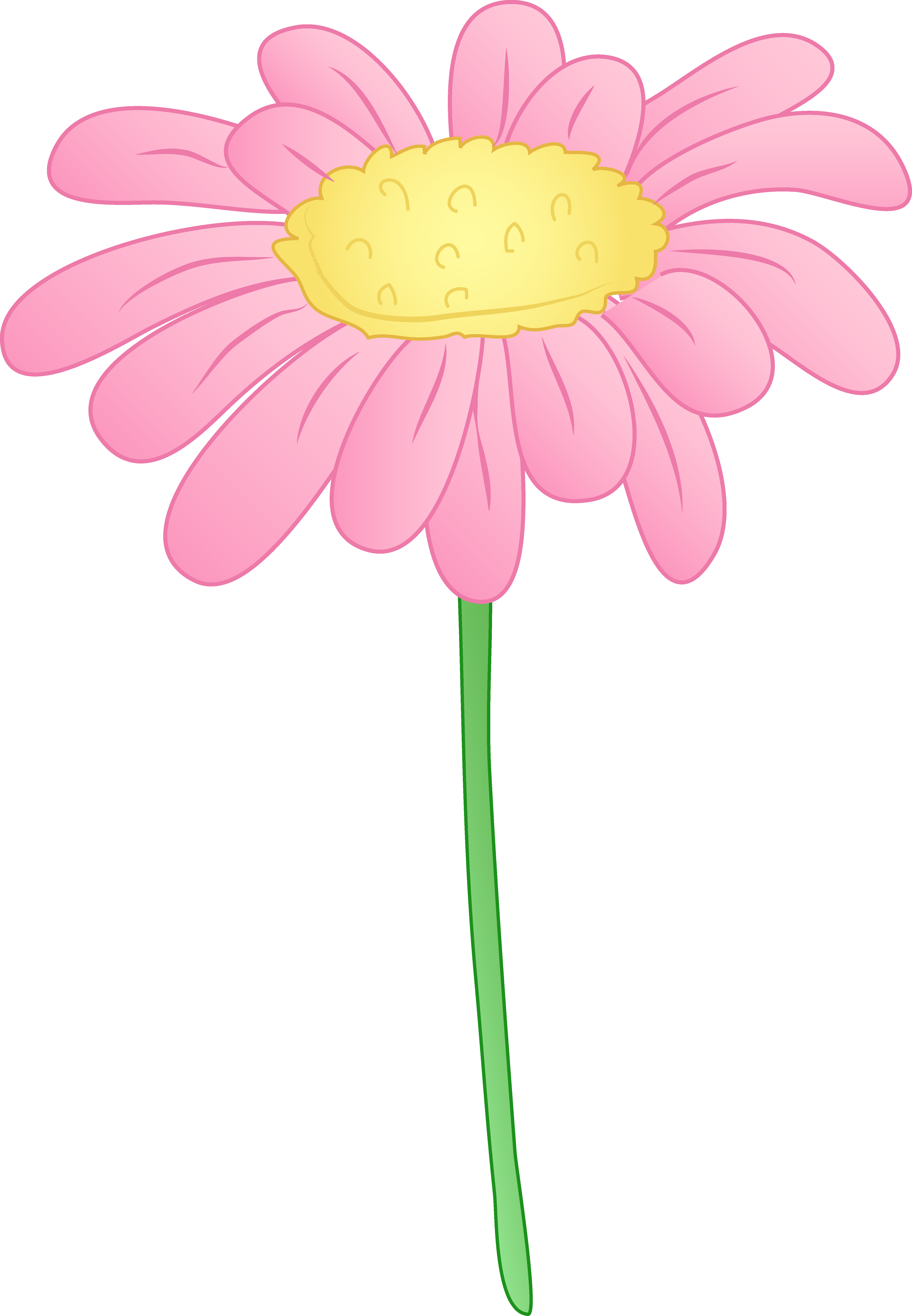 Pretty pink daisy flower. Daisies clipart black and white