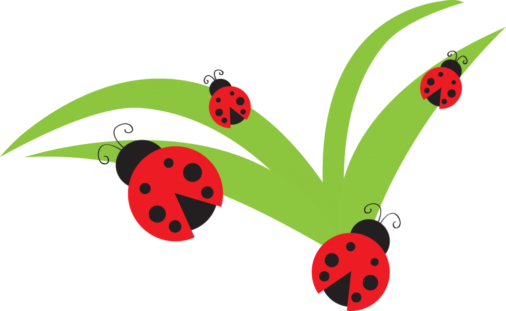 Strawberries clipart garden. Bug ladybug lady clip