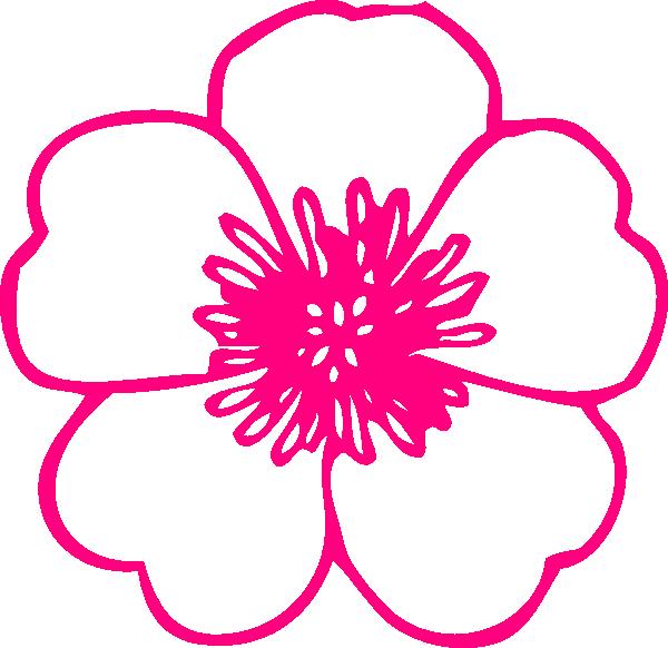 Flowers larkspur