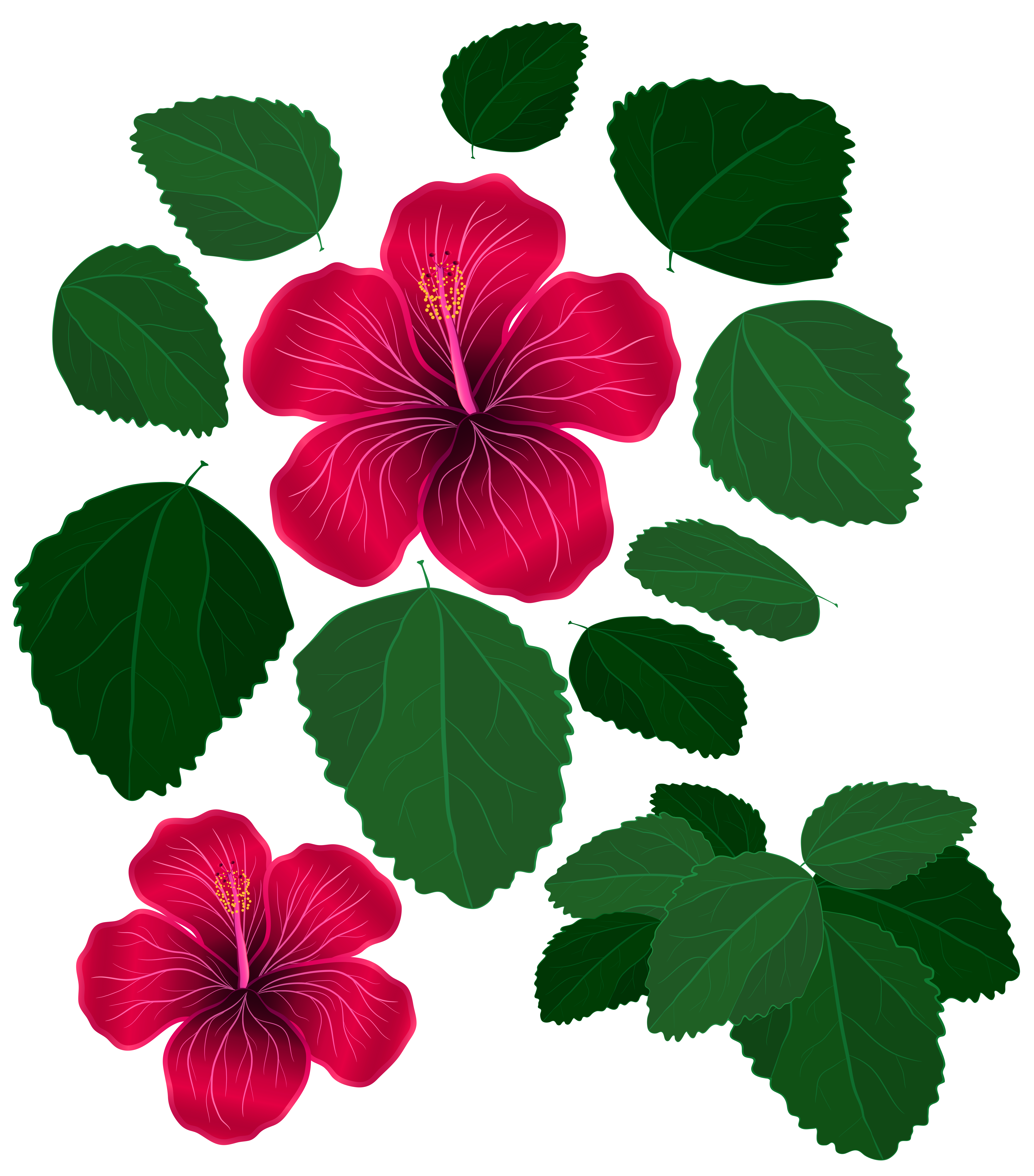Flower and leaves for. Hawaii clipart leaf