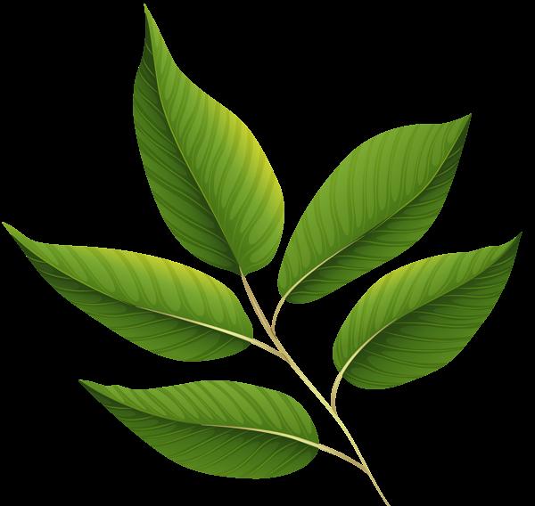 Leaf clipart boho. Green leaves png image