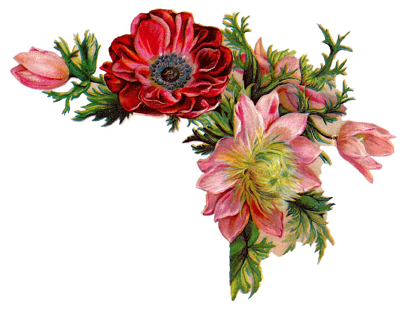 Antique images free digital. Flower vintage png