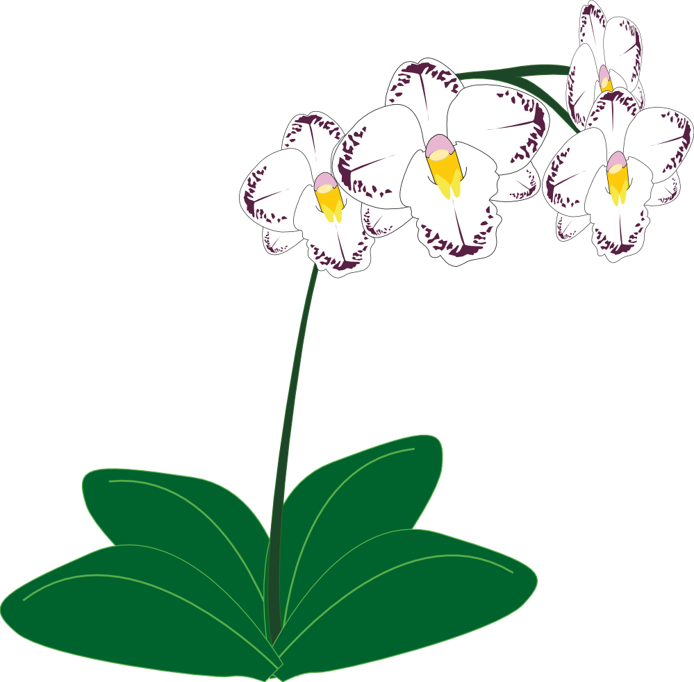 Flowers clipart root. Gousicteco orchid black and