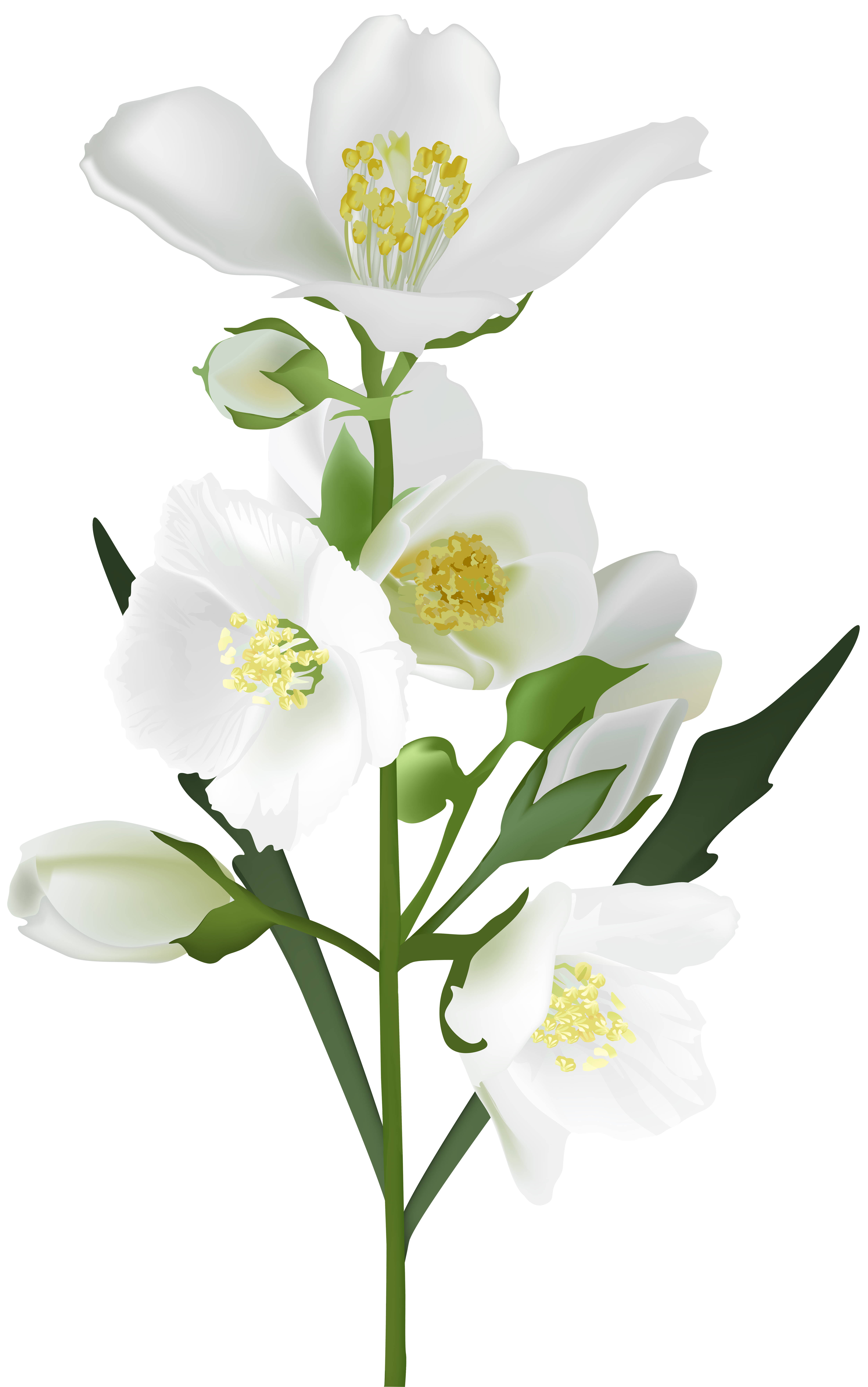 White flower png. Clip art image gallery