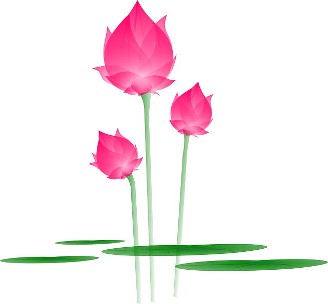 Water clipart flower. Lotus png images free