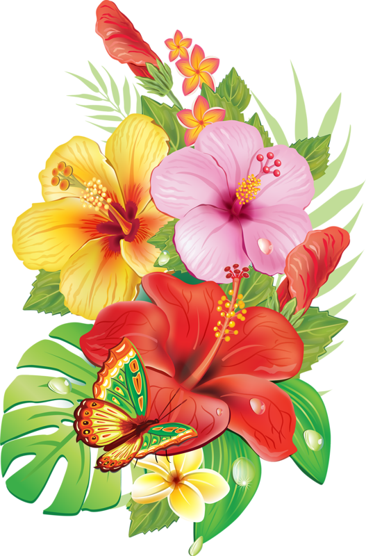 Hibiscus clipart tropical vine.  d cc png