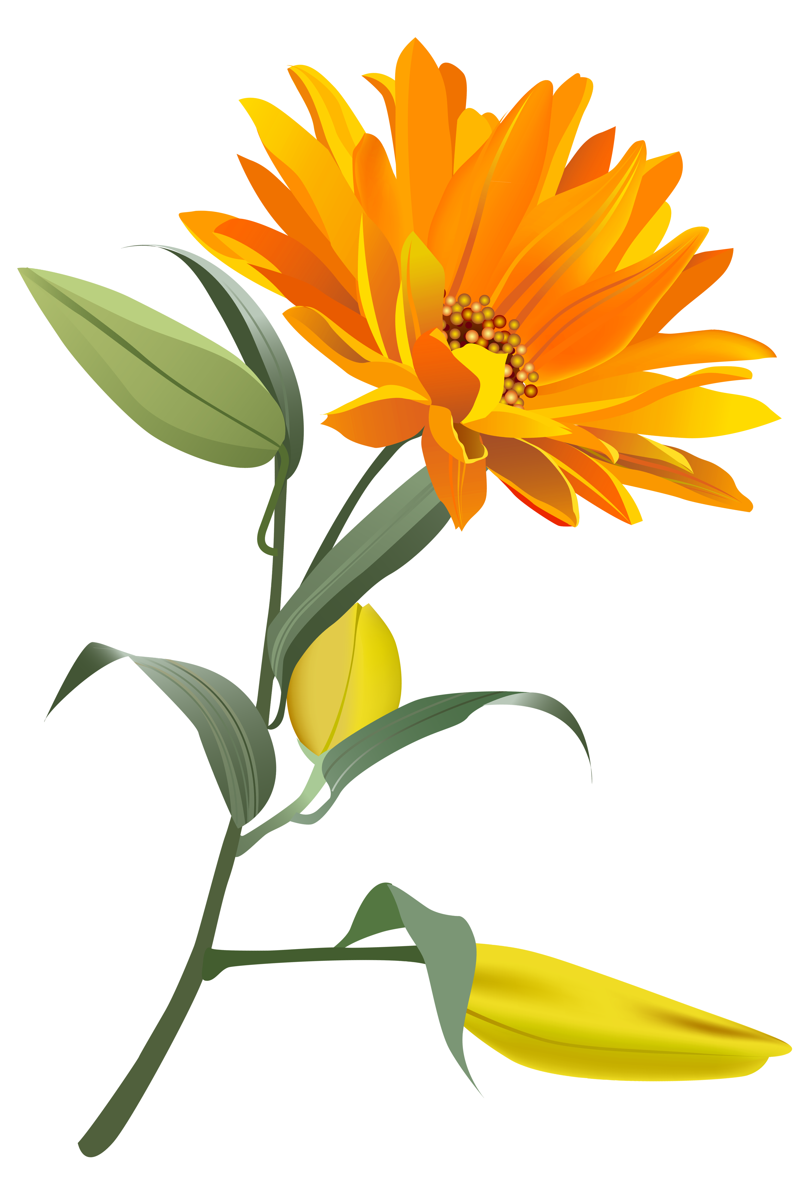 Clipart flower orange. Png clip art image