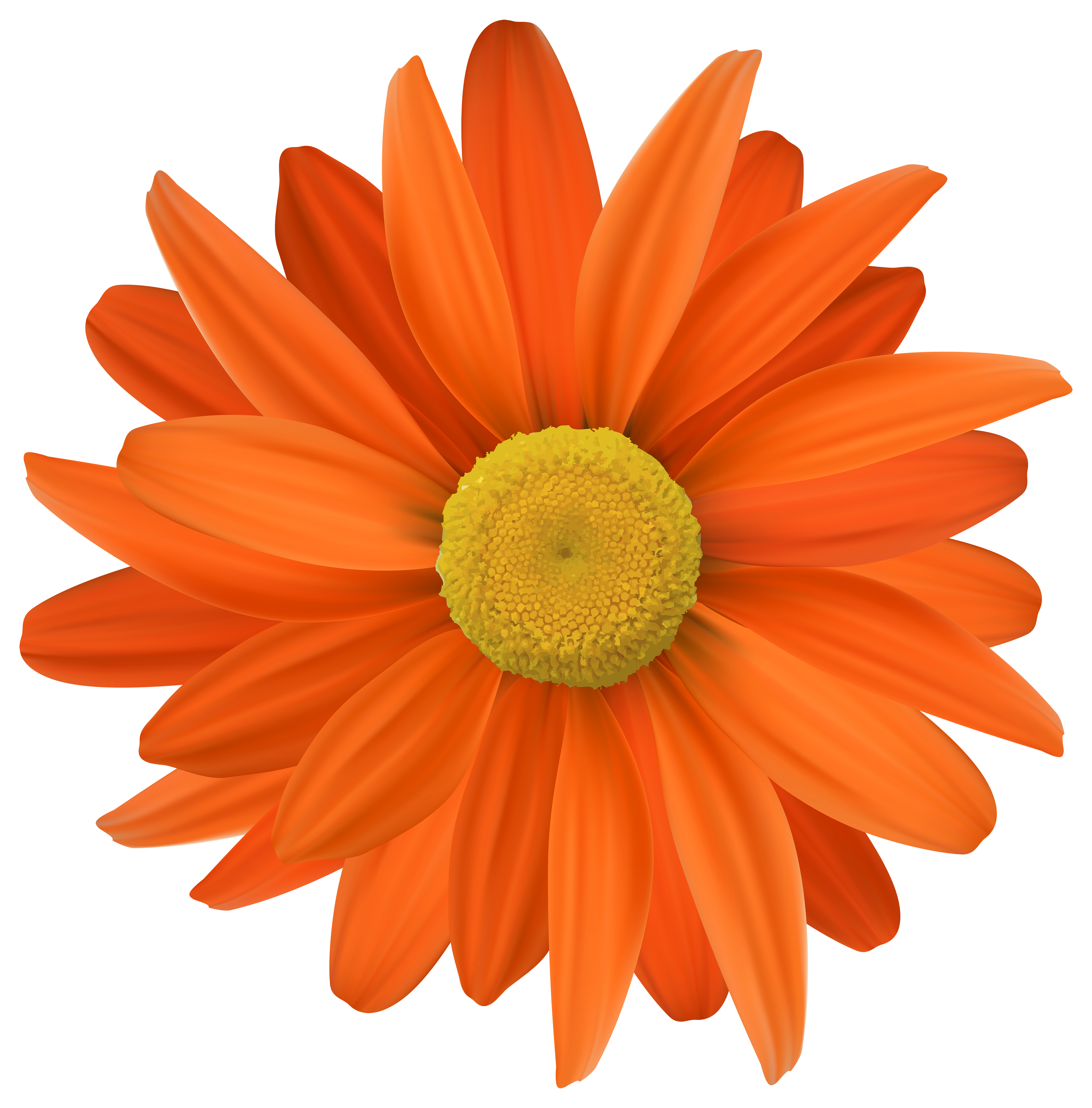 Orange flower png. Transparent clip art gallery