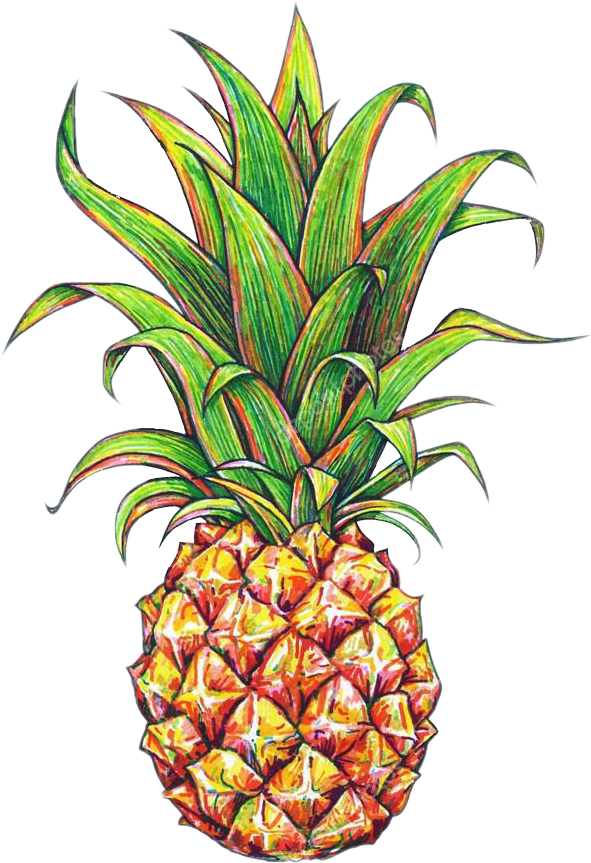 Pineapple clipart tumbler. Tumblr fruit picsart report