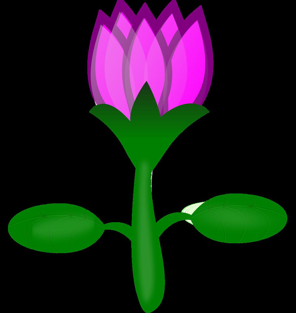 Flower clipart nelum. Lotus free stock photo