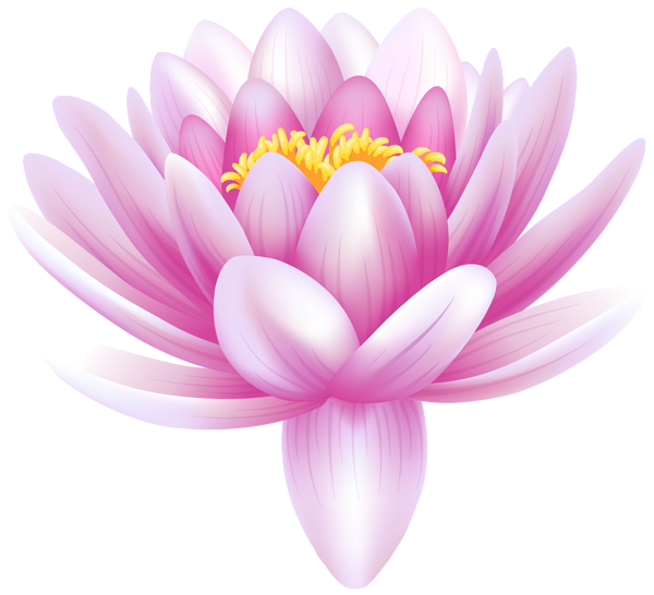 Wet clipart water flower. Lily transparent png clip