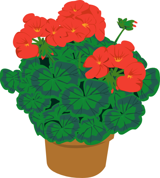 Plants clipart potted plant. Geranium in pot clip