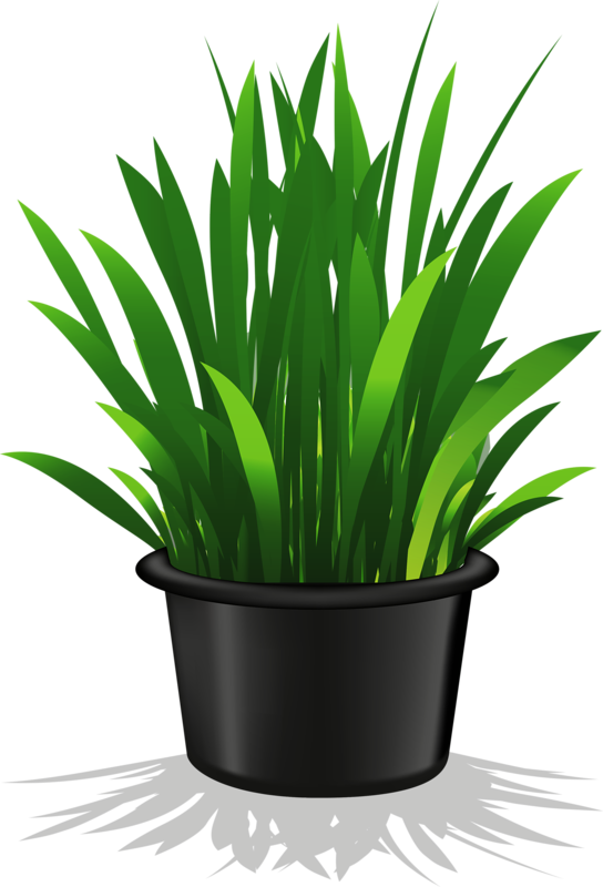 Flower pot png plant. Gardening clipart old man