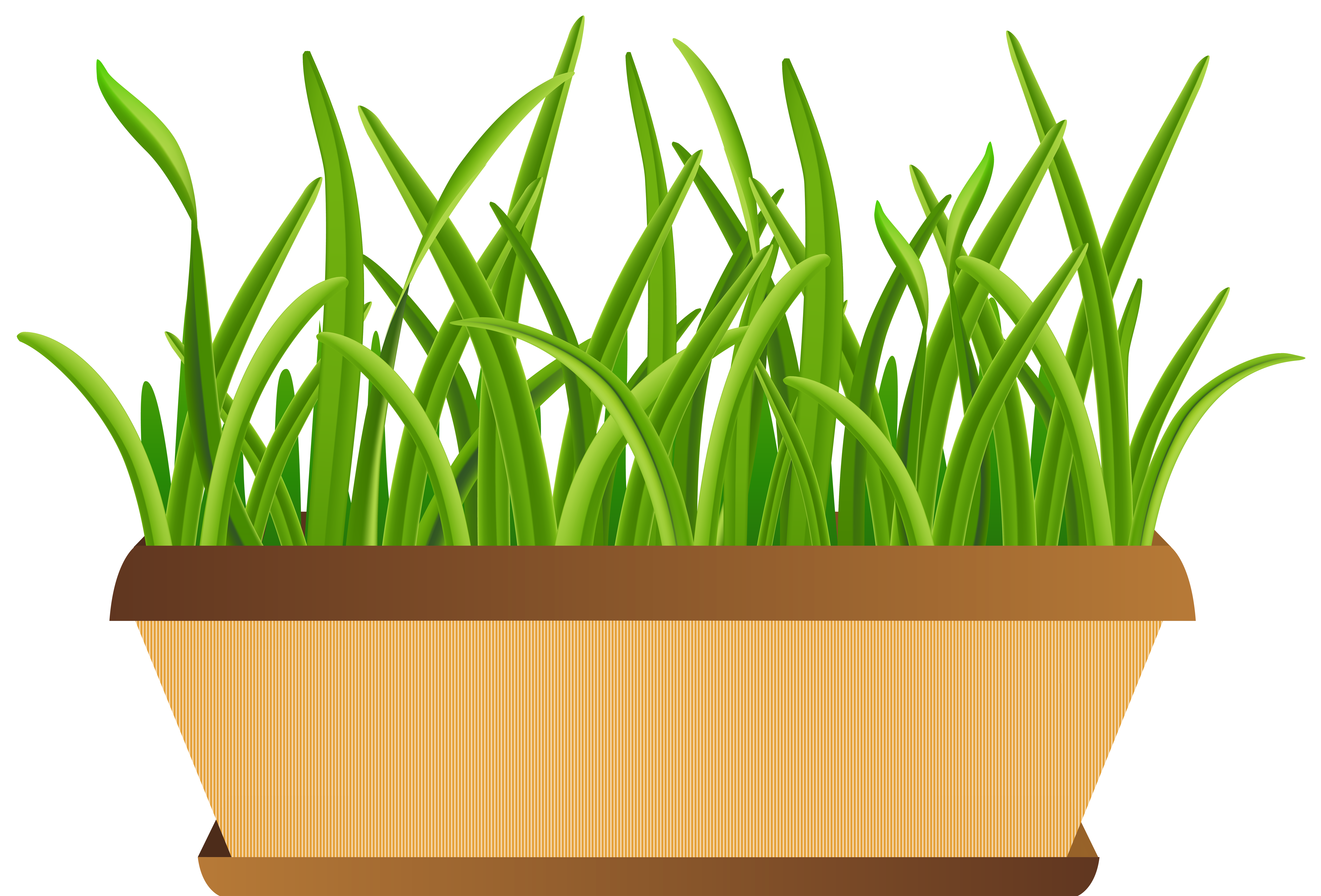 collection of flower. Clipart grass star