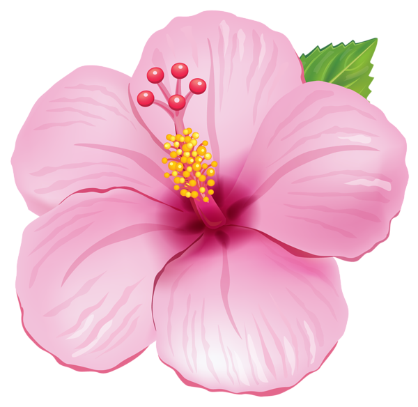 Pink exotic flower png. Hibiscus clipart aloha