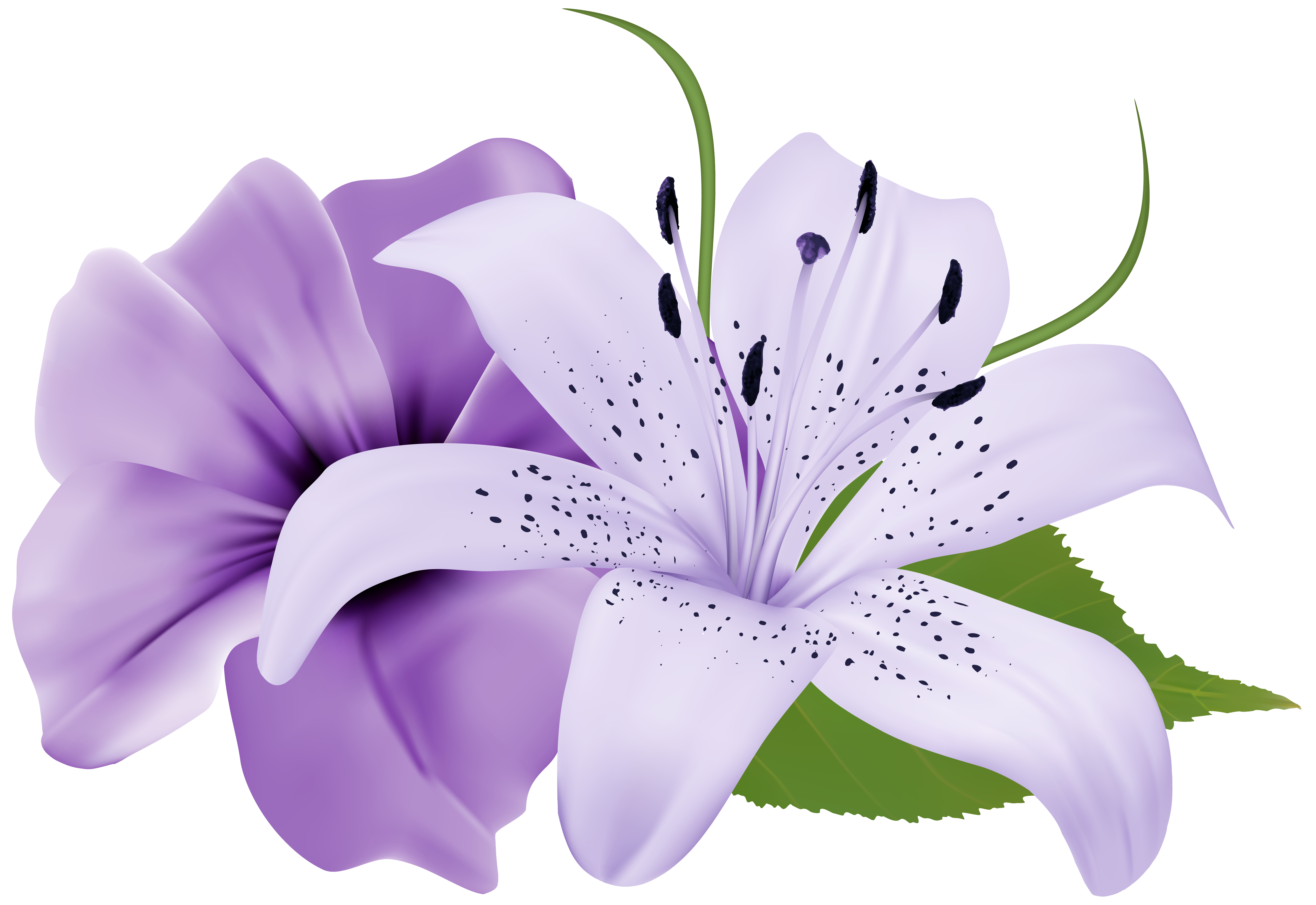 Two exotic png image. Clipart flowers purple