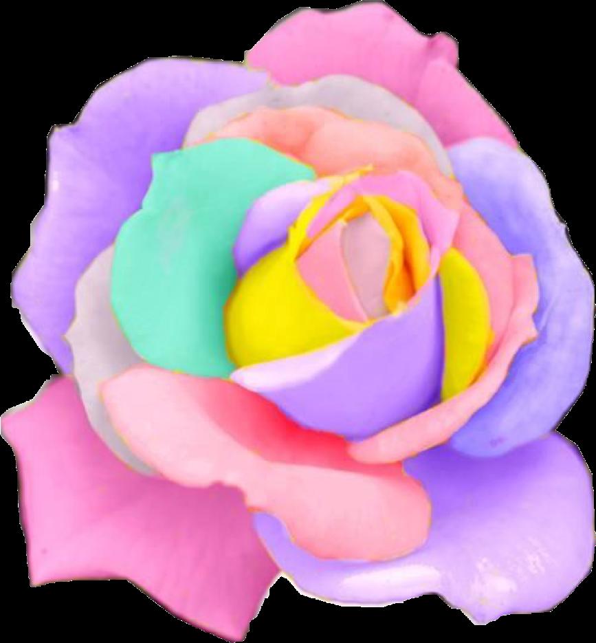 Flower clipart rainbow. Rose flowers pastel rosesfreetoedit