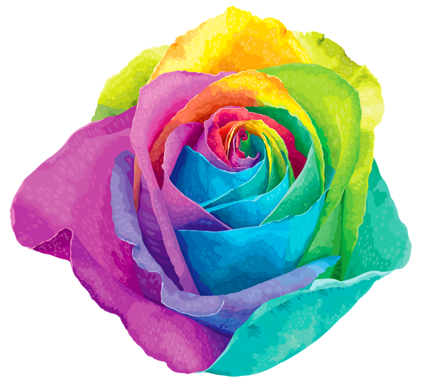 Multicolored rose transparent png. Flower clipart rainbow