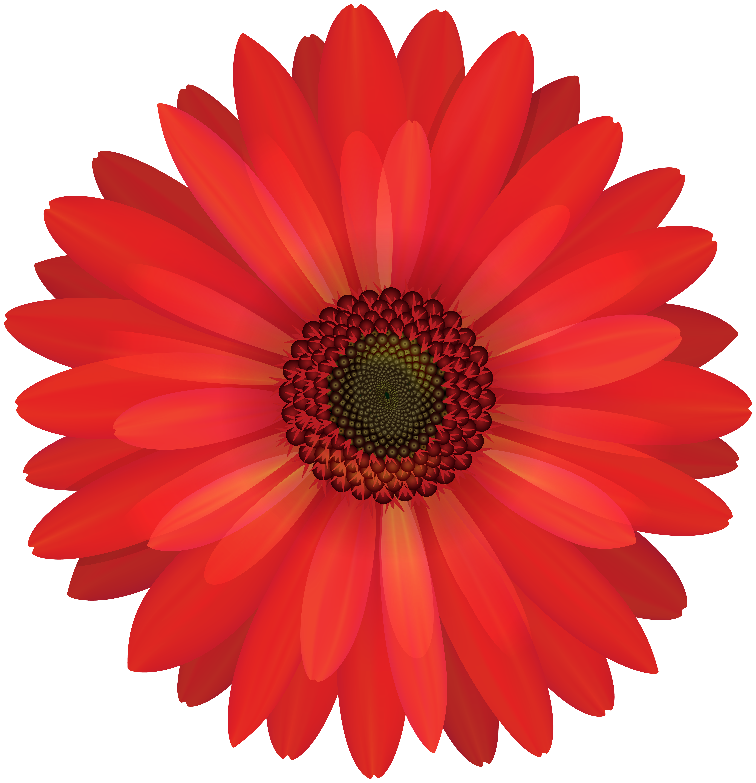 Gerbera png clip art. Clipart flower red