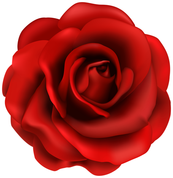 Red rose flower clipart. Roses vector png