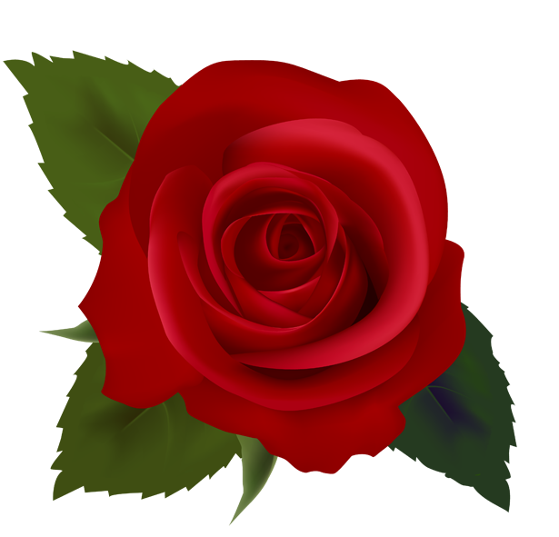 Clipart roses natural. Rose flower image esfiro