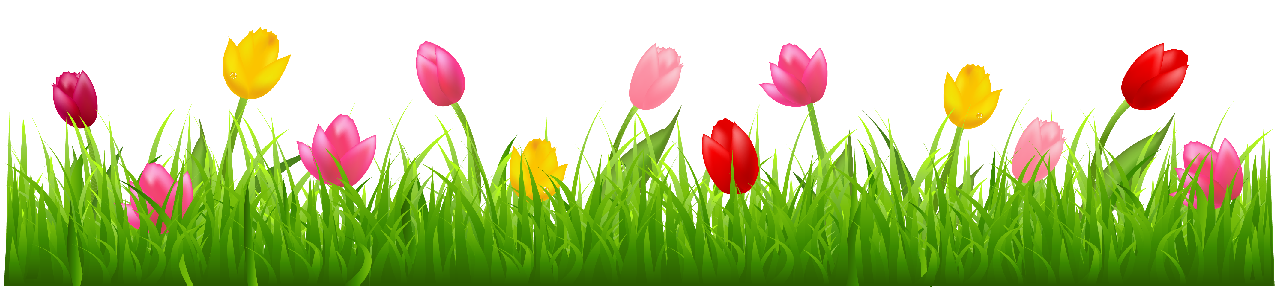 With colorful tulips png. Clipart grass cartoon