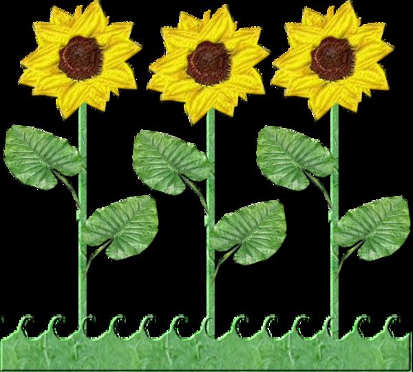 Flowers row of sunflowers. Tree clipart sunflower