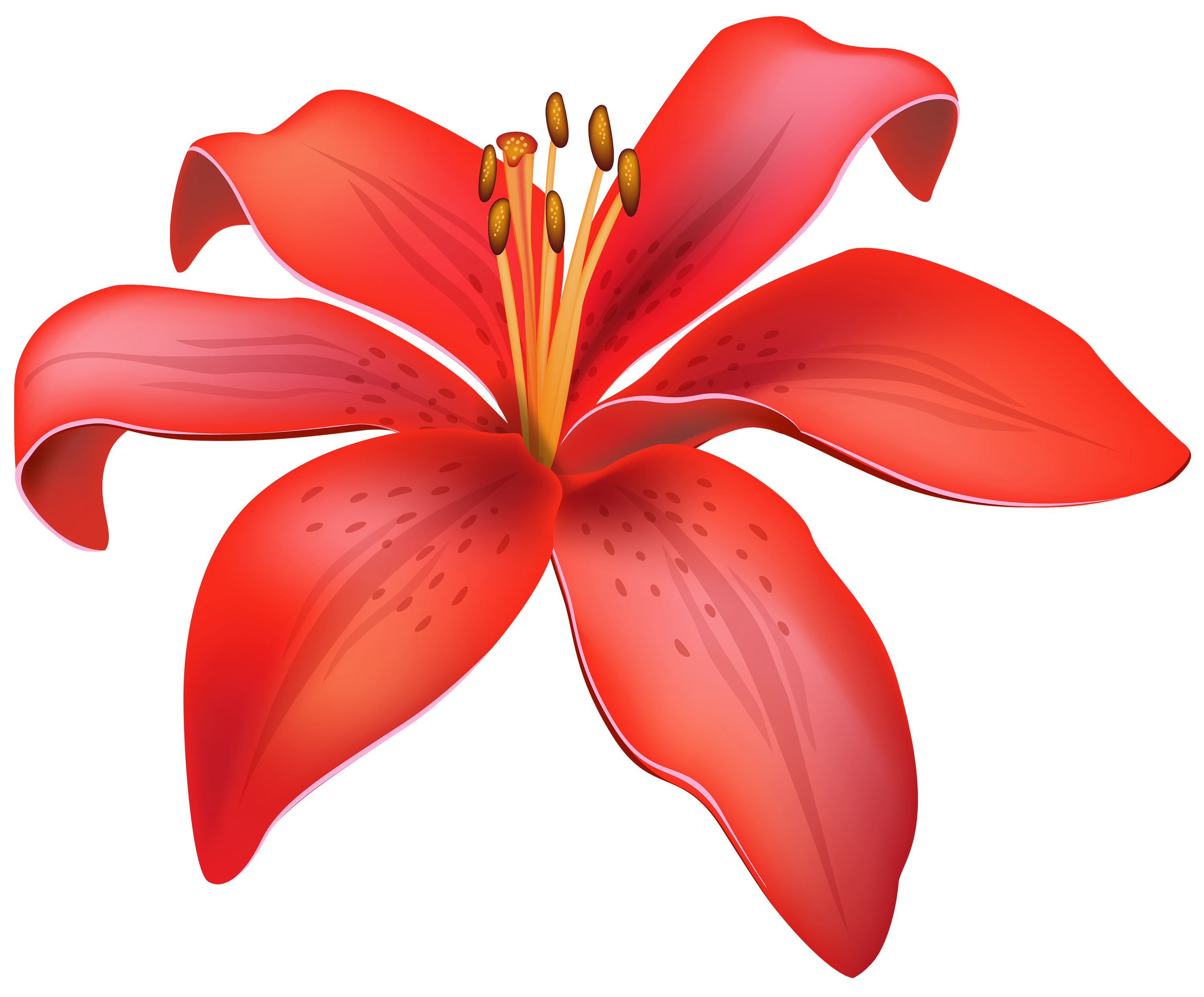 Flowers red lily flower. Treasure clipart magnificent