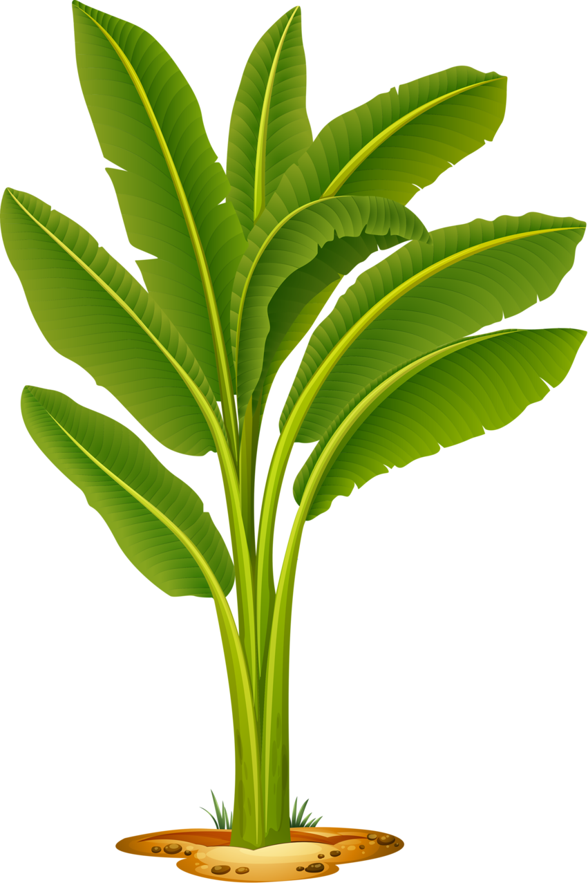Woodland clipart plant. Shutterstock png pinterest leaves