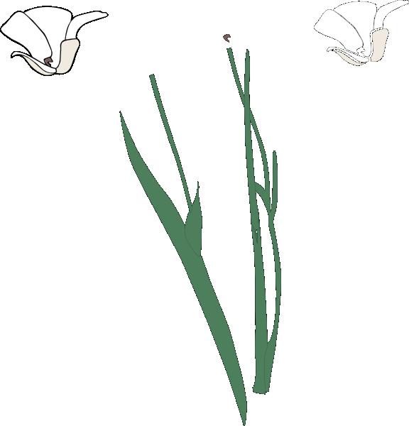 Flower black and white. Clipart pumpkin stem