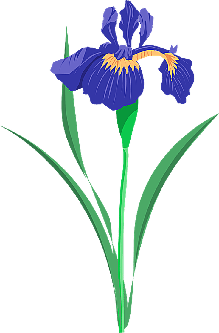 Flowers at getdrawings com. Floral clipart summer
