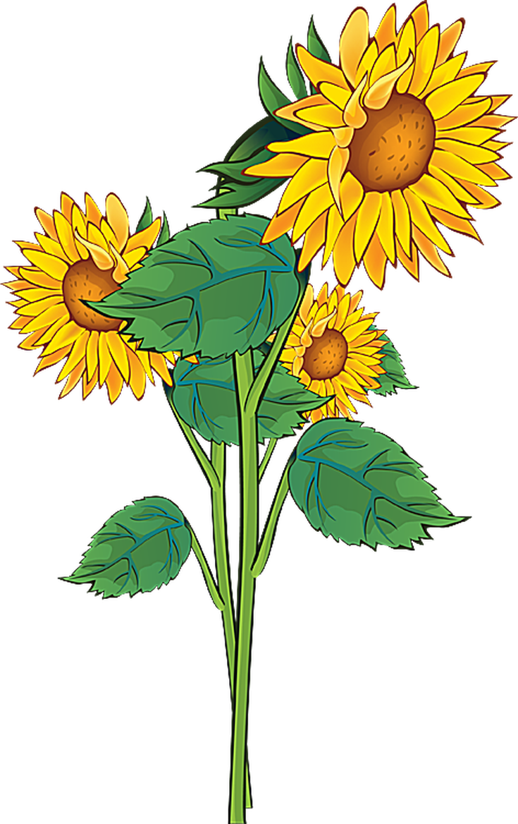 Floral clipart summer. Flowers at getdrawings com