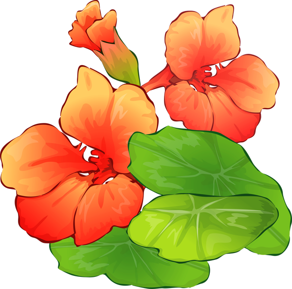 Photo clipart summer. Flowers panda free images