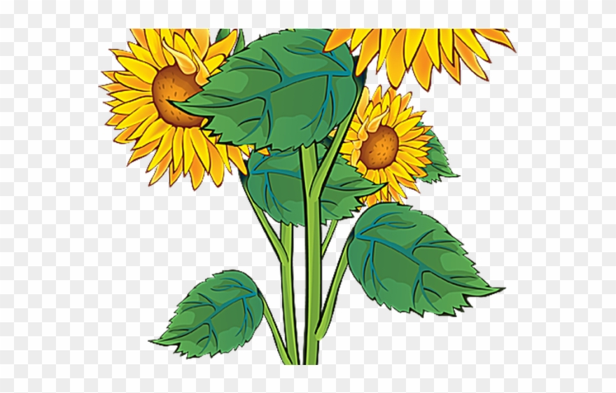 Plant sun clip art. Clipart flowers summer