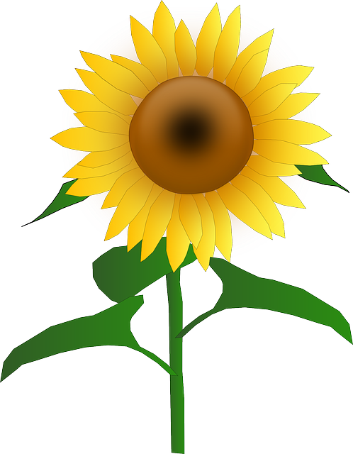 Free image on pixabay. Harvest clipart sunflower