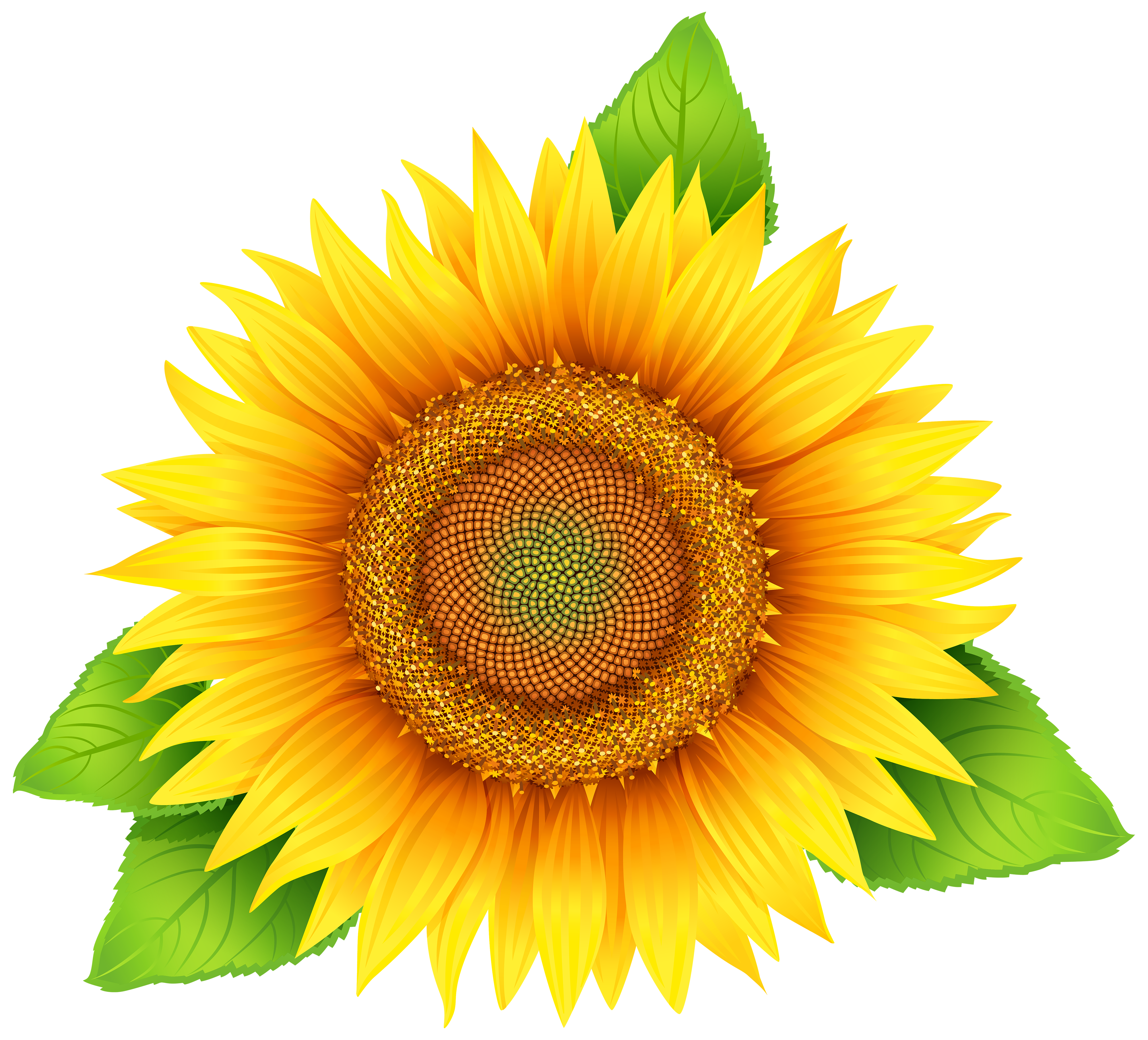 Sunflower clipart image gallery. Sun flower png