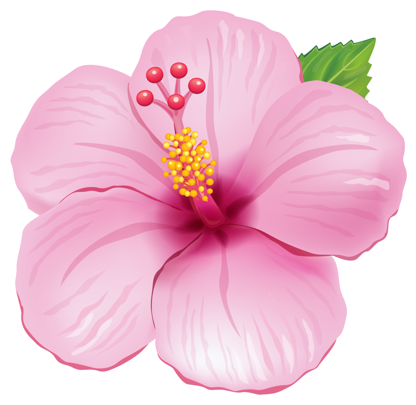 Flowers clipart tropical. Pink exotic flower png
