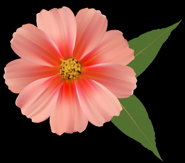 Clipart flower tub. Orange png image clip