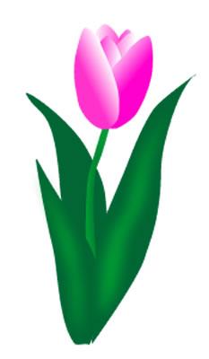 Daffodil clipart tulip. Free cliparts download clip