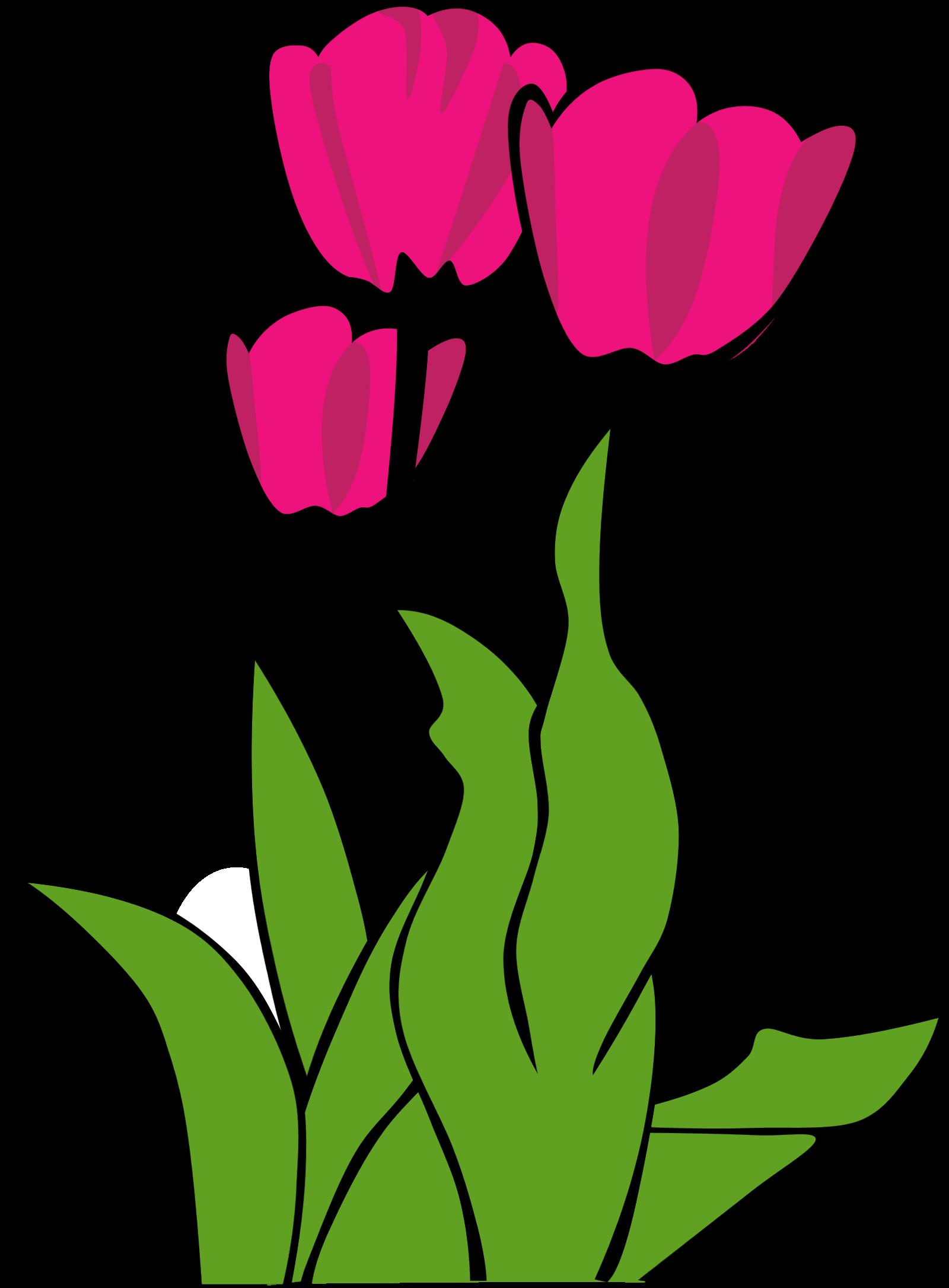 Panda free images clip. Flowers clipart tulip