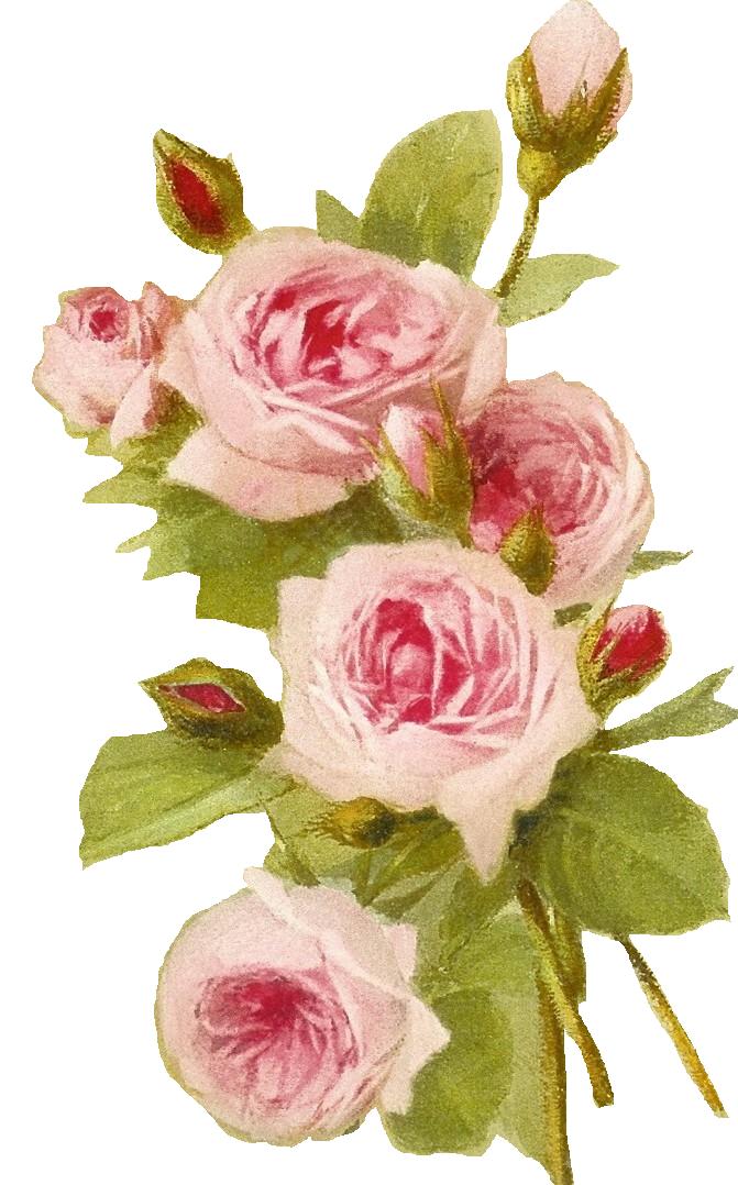 Clipart roses shabby chic. Http bp blogspot com